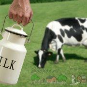 Почему у коровы соленое молоко: причины и решение проблемы