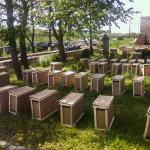Пчелопакеты на пасеке