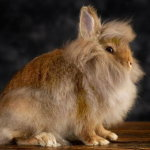 Пушистый кролик с большими бакенбардами