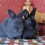 Милые крольчата голубые