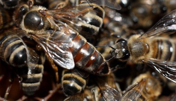 Блог о пчеловодстве - самая полезная информация для начинающих - Страница 11 из 11