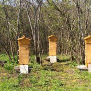 Павильонное содержание пчел: описание и видео