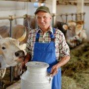 Изготовление сарая для коров своими руками: схемы и фото