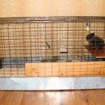 Кролик в самодельной клетке