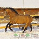 Бегущая по снегу лошадка