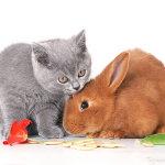 Рыжий кролик и серый котёнок