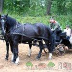 Постромочно-дышловая запряжка коней