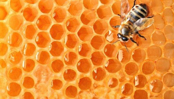 Секреты пчелиного яда: панацея от заболеваний или опасное вещество 286
