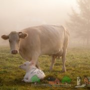 Клички коров, клички для коров, как назвать корову