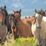 Разноцветные лошадки в природе