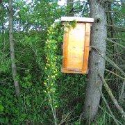 Как поймать пчелиный рой: техники, советы и видео обзор