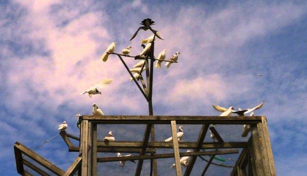 Блог о голубях - интересная и полезная информация для начинающих