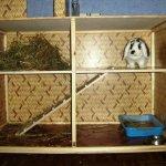 Кролик сидящий в ухоженной клетке