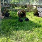 Ушастые питомцы отдыхают на зеленой травке
