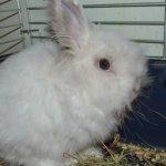 Белый декоративный кролик в клетке