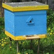 Отверстие в улье для пчел или летки: особенности и фото