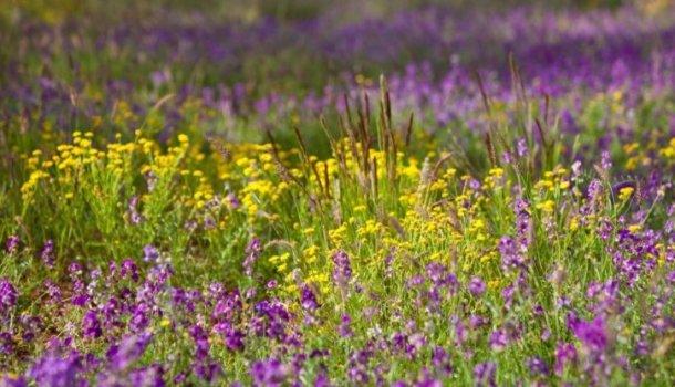 Блог о пчеловодстве - самая полезная информация для начинающих - Страница 8 из 11
