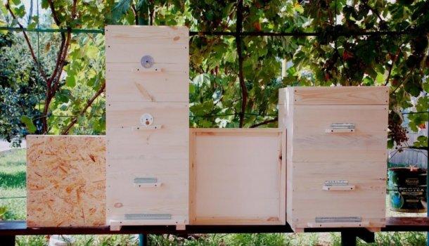 Блог о пчеловодстве - самая полезная информация для начинающих - Страница 5 из 11
