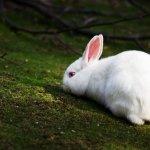Кролик отдыхает в тени