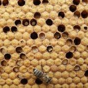 Лечение пчел от Нозематоза: инструкция с фото и видео