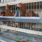 Как сделать клетку для цыплят своими руками: фото и пошаговая инструкция