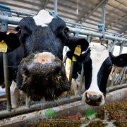 Мини фермы для коров: фото и видео обзор