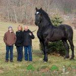 Конь породы Першерон с владельцами