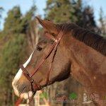 Оголовье Кука на рыжем коне
