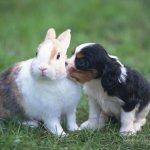 Кролик и щенок подружились