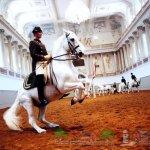 Венская школа верховой езды