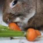 Крольчонок грызет морковку