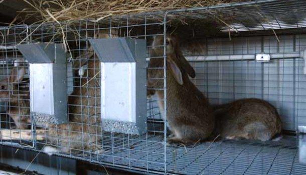 Блог о кроликах - самое интересное и полезное для начинающих - Страница 9 из 10