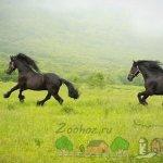 Две лошадки бегают в поле