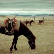 Обзор башкирской породы лошадей, ее описание и фото