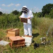 Что такое нуклеус и для чего он нужен в пчеловодстве