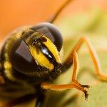 Голова насекомого крупным планом