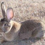 Кролик в живой среде