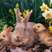 Можно ли использовать кроличий навоз как удобрение для огорода: полезен или нет помет кролика и отзывы о применении