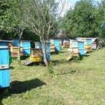 Пасека частного пчеловода