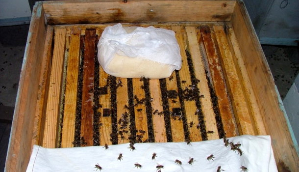 Блог о пчеловодстве - самая полезная информация для начинающих