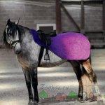 Полупопона для скаковых лошадей