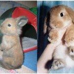 Маленький и уже выросший крольчонок