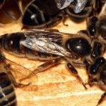 Королева пчел со своей семьей