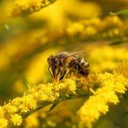 Чему можно поучиться у пчелы: интересные факты и фото