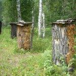 Расставленные в лесу борти