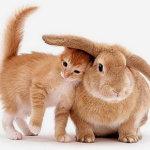 Рыжий кролик и котёнок