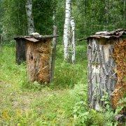 Тонкости лечения пчелами: советы, видео, отзывы