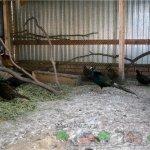Птицы в закрытом загоне