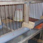 Клетка для цыплят с поилками и кормушками