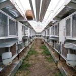 Кроличья ферма на 60 голов